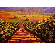 Provençal Vineyard Farmland Photographic Print
