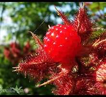 Red Raspberry by Sir-Vanillabean