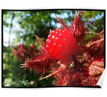 Red Raspberry Poster