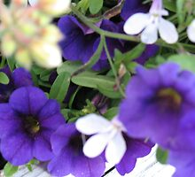 PPP Purple Petunias! by MarianBendeth
