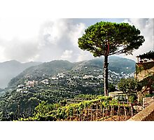Vineyard in Ravello Photographic Print