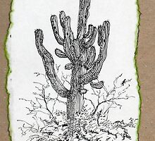 A Giant Saguaro Cactus of Southern Arizona * by James Lewis Hamilton