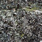To the lichens, the etched stone was rich and fertile. by Scott  Richey
