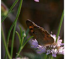 Morning Nectar by earthenrose
