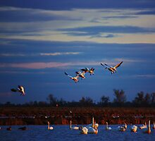 In for a landing by E.R. Bazor