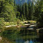 Yosemite - A View of Half Dome by suz01