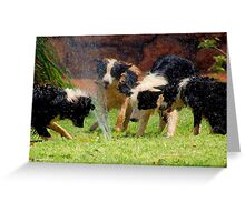 FOUR BORDER COLLIES AND A HOSE! Greeting Card