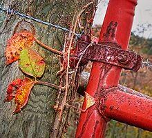 Latch on a Well-Worn Gate by Nadya Johnson