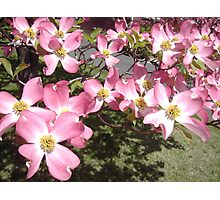 Springtime in New Jersey Photographic Print