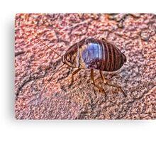 Bush Bug Canvas Print