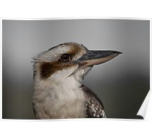 the Kookaburra Poster