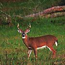 Buck at Dusk by Terri~Lynn Bealle