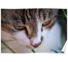Kaizoe in the Cat Max Poster