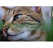 Suki in the Cat Max Photographic Print