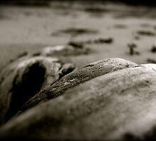 Drift Wood by Kathleen-Marnie
