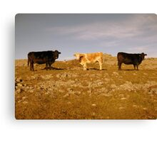 Frosty morning in The Burren Canvas Print