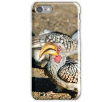 TWO IS COMPANY - Southern Yellow-billed Hornbill - Tockus leucomelos – Geelbekneushoringvoel iPhone Case/Skin