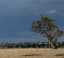 View from Woolshed  by leannemulcahy