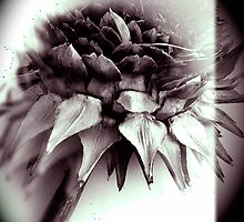 Artichoke flower  by chrissylong