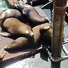 Sea Lions in Newport, OR by AuntieBarbie