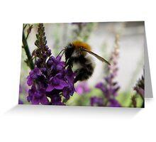 bee gathering pollen Greeting Card