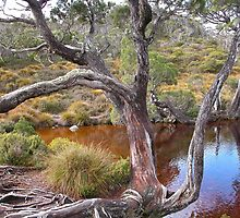 The Wombat Pool, Cradle Mountain,Tasmania, Australia. by kaysharp