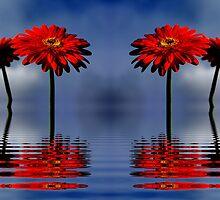 Flower by Gabi Siebenhühner