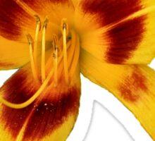 'Yellow Daylily' Sticker
