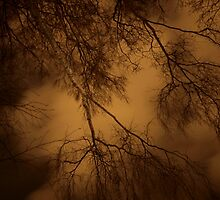 Branches in the sky by Arve Bettum
