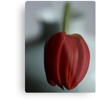 Simply red.....and white! Metal Print