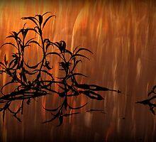 Fire reflections by Geraldine Lefoe