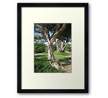 Living Parchment Framed Print