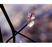 Ice droplet Photographic Print