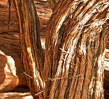 Twisted tree trunk in Golden Gate Park by Agnes Eperjesy