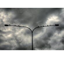 Birds on a ......Light Pole! Photographic Print