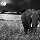 Full Moon Night by Charuhas  Images
