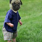 Baby Pug by AFormby