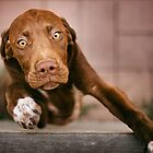 Little Brown Dog by Alicia Adamopoulos