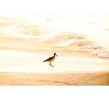 Morning Swim Photographic Print