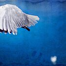 The Gull by Alicia Adamopoulos