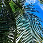 Costa Rica Palm by Sherri Fink