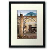 Smug Giraffe Framed Print