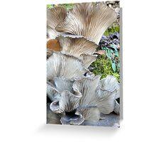 Unrequited Splendor Greeting Card