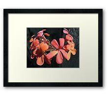 Orange Flower Petals Framed Print