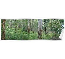 Karri Forest Panorama Poster