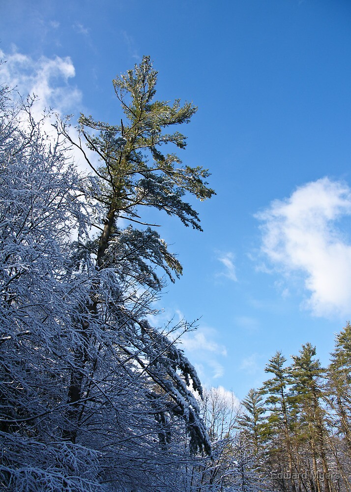 Winter Tree and Sky by Edward Myers