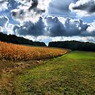 Corn Field in Germany by Edward Myers