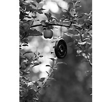 Apple and Weight Tree Photographic Print