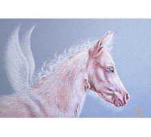 Pinky - Pegasus foal Photographic Print