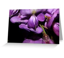 Wisteria Up Close Greeting Card
